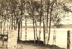 Björkar vid Ljusnan i Arbrå - Kyrksjön