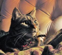 hos-kattfotografen-2.jpg